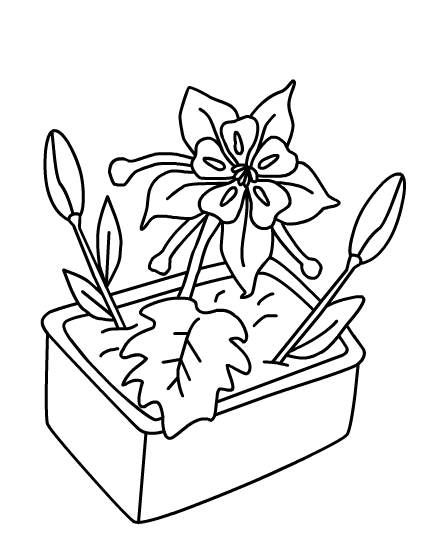 rose coloring pages games free - photo#46